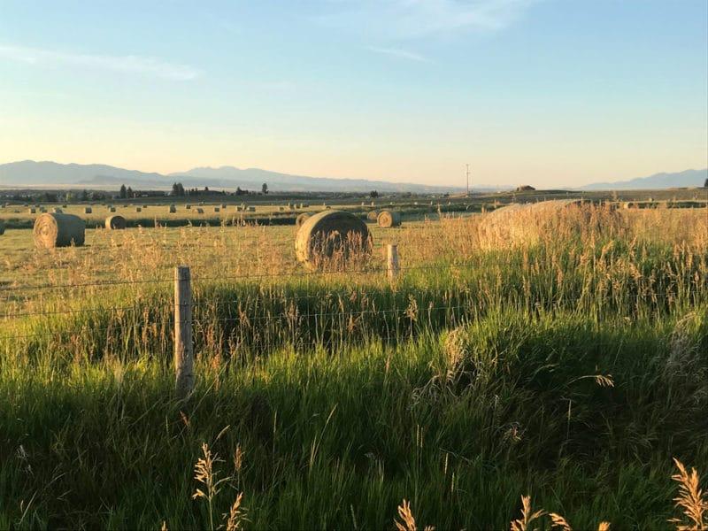 Hay bails in an open field in Dillon Montana.