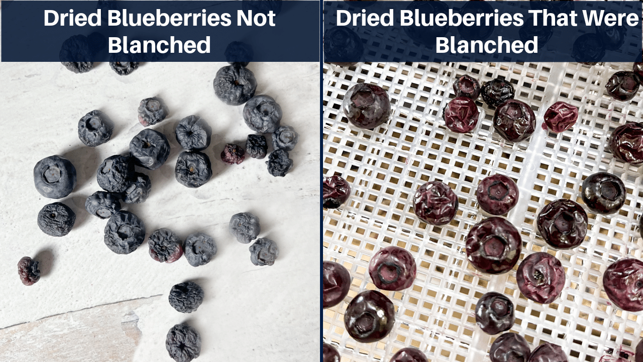 Collage of blueberries that were balanced vs. not blanched.